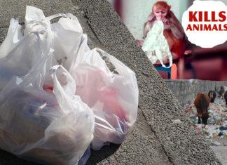 A stupendous solution for plastic pollution